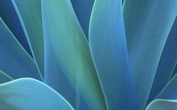 la coloration à base de plante